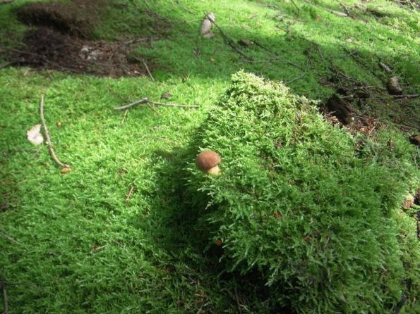 Одинокий гриб...