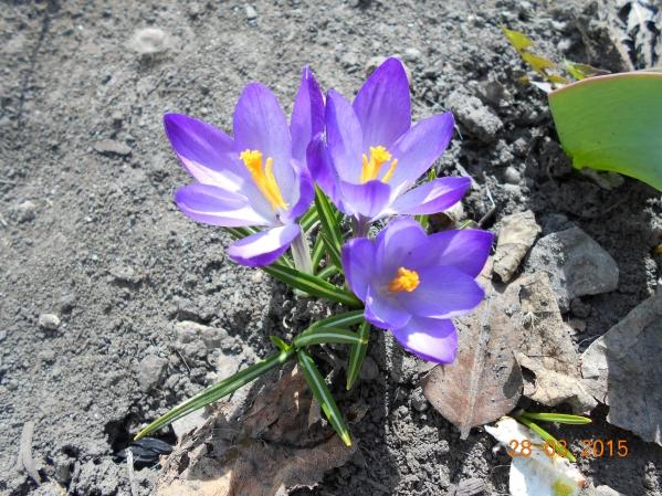 Вот и весна пришла