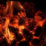 никому не нужное топливо, или горящие шишки...