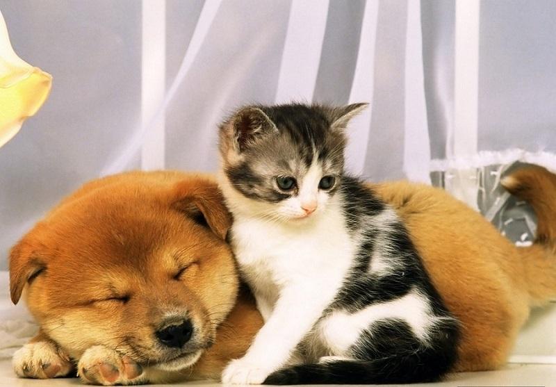 Прикольные фото собаки кошки