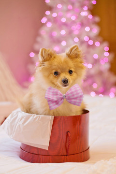 Щенок на Рождество